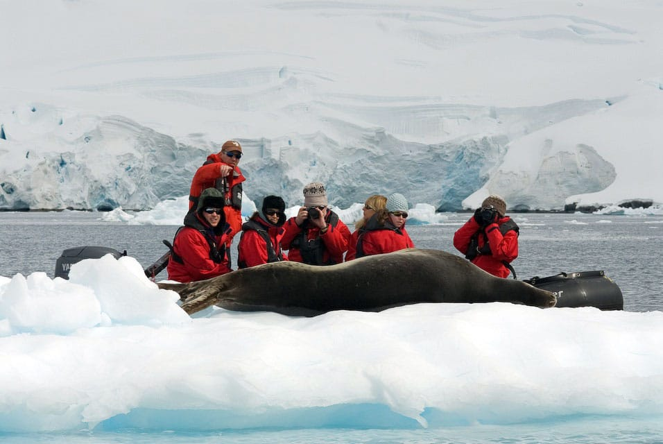 Antarctica-Experience-Day-2-Leopard-Seal