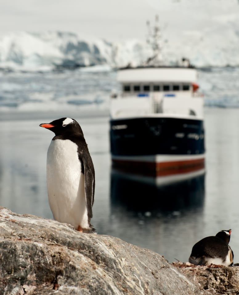 Antarctica-Experience-Day-3-Gentoo-and-yacht
