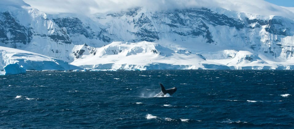 Antarctica-Experience-Day-8-Whale-Breach
