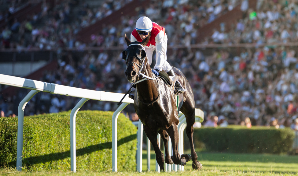 Horse Racing Air Charter Private Jet Charter For